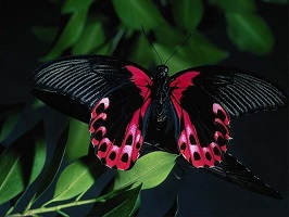 cool-nature-butterfly-wallpaper