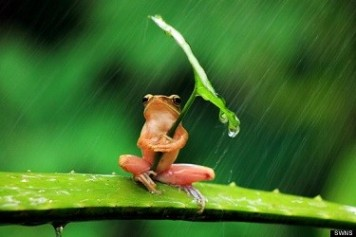 cute-frog-umbrella-rain