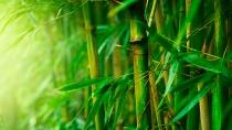 bamboo (1)