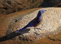 bird-Mike