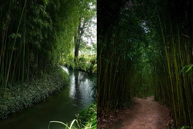 Stream-Bamboo Forest-1